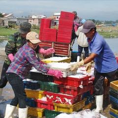 Hỗ trợ nhiên liệu để ngư dân bám biển