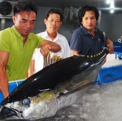Lợi ích bảo quản cá ngừ đại dương bằng công nghệ nano UFB