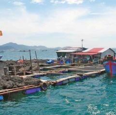 Cam Ranh: Yêu cầu dời lồng bè thủy sản ra khỏi luồng hàng hải