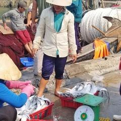 Ngư dân Huế mất mùa cá vụ Nam