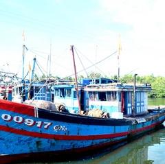 Quảng Nam: Khó quản lý nghề cá ven bờ