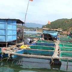 Muốn phát triển nuôi biển cần ứng dụng công nghệ cao
