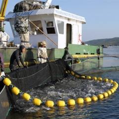 Khánh Hòa tận dụng mọi thế mạnh để nuôi biển