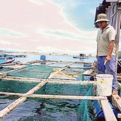 Ninh Thuận: Giải pháp nuôi tôm hùm và cá biển theo hướng bền vững