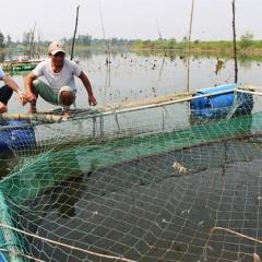 Nuôi cá chẽm cửa biển Quảng Trị