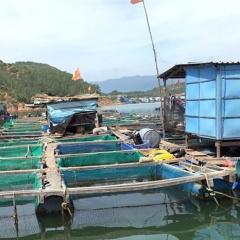 Làng nuôi cá lồng đổi đời!