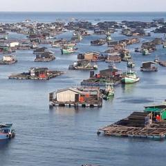 Một số quy định mới trong lĩnh vực nuôi trồng thủy sản