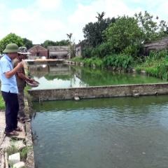 Thu nhập trên 1 tỷ đồng/ năm nhờ nuôi cá rô đồng