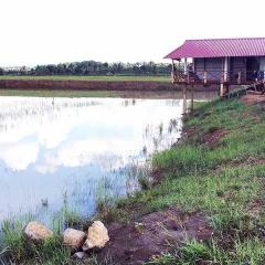 Đak Đoa: Thu nhập khá nhờ nuôi cá trên ruộng lúa kém hiệu quả