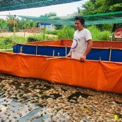 Mô hình nuôi ếch Thái Lan trong bể lót bạt hiệu quả ở An Giang