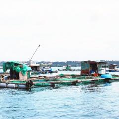 Nuôi trồng thủy sản Cam Ranh: Khó triển khai theo quy hoạch