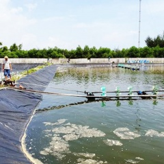 Hà Tĩnh: Đâu rồi những triệu phú, tỷ phú nuôi tôm?