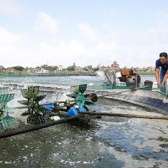 Hải Chính: Ứng dụng khoa học công nghệ trong sản xuất thủy sản