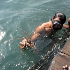 Ninh Thuận ưu tiên nuôi biển công nghiệp xa bờ