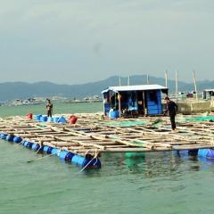 Tăng cường xử lý các trường hợp nuôi thủy sản ngoài quy hoạch
