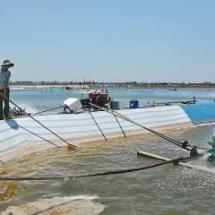 Tính hiệu lạc quan trong nuôi trồng thủy sản Nam Định