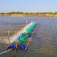 Kỹ thuật phòng chống nắng nóng trong nuôi tôm cá