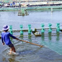 Thuận Nam đẩy mạnh phát triển nuôi trồng thủy sản