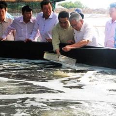 Trần Đề: Thả nuôi tôm trên 3.000 ha