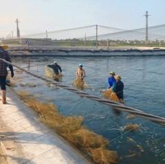 Thái Thụy: Sản lượng nuôi trồng thủy sản ước đạt 27.502 tấn