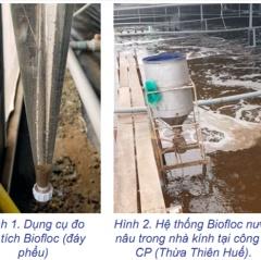 Tìm hiểu công nghệ Biofloc trong nuôi trồng thủy sản