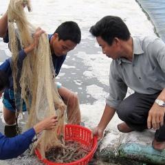 Nuôi trồng thủy sản an toàn: Hướng đi bền vững