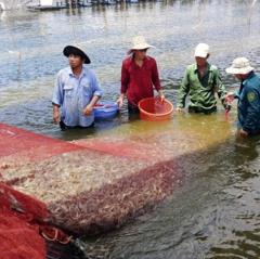 Nuôi trồng thủy sản: Cẩn trọng trong mùa mưa