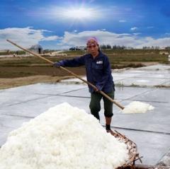 Quỳnh Lưu – sản lượng muối 6 tháng đầu năm 2019 hơn 29 ngàn tấn