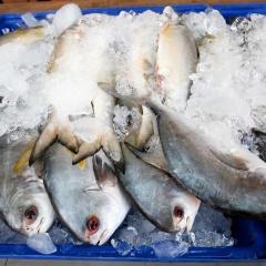 Cần quy định ngưỡng kháng sinh để tiêu thụ thủy sản nội địa