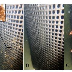 Một lựa chọn mới để điều trị bệnh ký sinh trùng trên cá biển nuôi