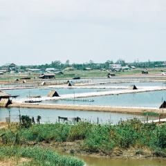 TP HCM: Thông tin kết quả quan trắc môi trường nuôi thủy sản tháng 7