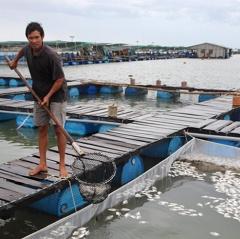 Cá chết hàng loạt trên sông Chà Và