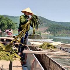 Bố Trạch xây dựng thương hiệu cá trắm sông Son