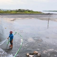 Kinh nghiệm của nông dân Thái Lan để quản lý WSSV trên tôm