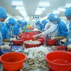 Thuận lợi và thách thức khi ký EVFTA của xuất khẩu tôm Việt Nam