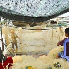 Mùa cá cơm trên hồ Trị An