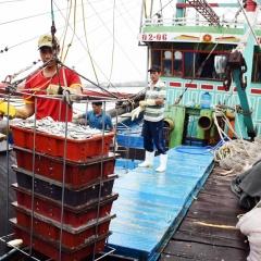 Đánh bắt thủy sản Nghệ An 6 tháng đạt hơn 1.600 tỷ đồng