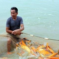 Hưng Yên: Giá thủy sản tăng, người nuôi phấn khởi