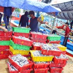 Truy xuất nguồn gốc thủy sản tại cảng cá: Vẫn khó kiểm soát