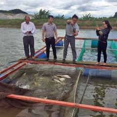 Đức Trọng - Lâm Đồng: Phát triển mô hình nuôi cá Thát Lát Cườm