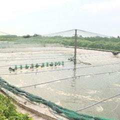 Thu lãi trên 600 triệu đồng từ nuôi tôm trong nhà bạt