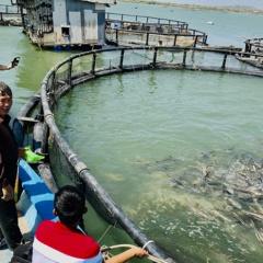 Bà Rịa - Vũng Tàu: Ứng dụng công nghệ trong nuôi cá lồng bè