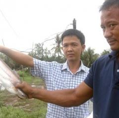 Triệu phú xứ cù lao nhờ nuôi cá bông lau