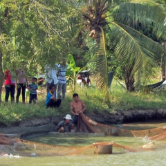 Mô hình nuôi cá bông lau hiệu quả ở Trà Vinh