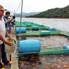 Bình Định: Khuyến khích nuôi cá lồng trên hồ chứa Hội Sơn