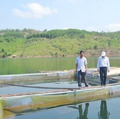 Quảng Nam: Cá nuôi ở lòng hồ thủy điện chết hàng loạt