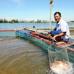 Nghề nuôi cá lồng - Một đời gắn bó sông nước