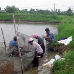 Thái Bình: Bảo vệ thủy sản nuôi  trước cơn bão số 2