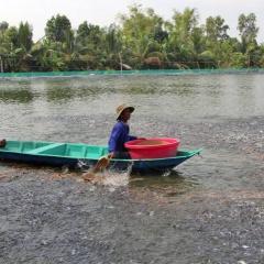 Người dân Tân Hưng lỗ hơn 40 tỷ đồng từ ương cá tra giống