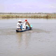 Để nghề nuôi cá tra Tân Hưng phát triển ổn định, bền vững